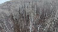 Treetop video perspective of aspen forest