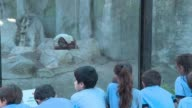 A trial is underway in Buenos Aires to decide whether 29 year old orangutan Sandra who lived all her life in a zoo will be able to adapt to a natural...