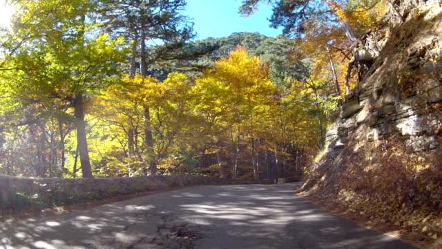 trip into the mountains through autumn forest, GoPro
