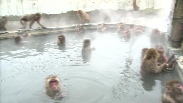 Image result for monkey bath