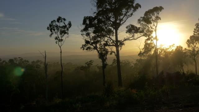 Tropical Australian Landscape at Sunrise