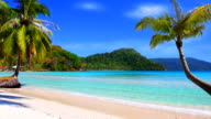 Tropical beach and palm tree