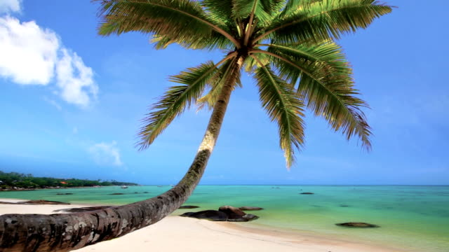 Tropical Beach Paradise with Palm Trees