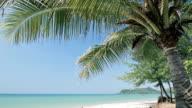 Tropical beach with a palm