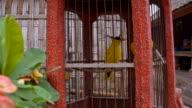 LS Tropical Bird In The Birdcage