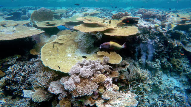 Tropical Coral Garden Stock Footage Video Getty Images