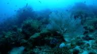 Tropical coral reef undersea