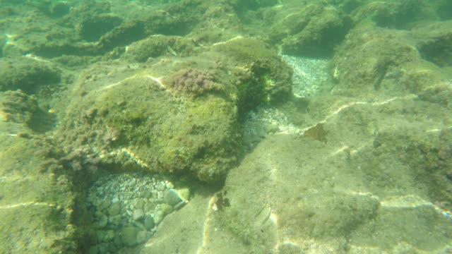 Tropische koraalrif, onderwater geschoten. Prachtige onderwater clip.