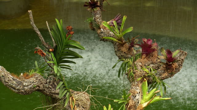 tropical plant growth