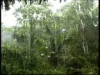 Tropical rain falling in the forest, MS low angle, Panama, Central America