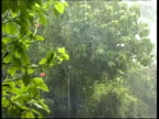 Tropical rain falling in the forest, MS, Panama, Central America