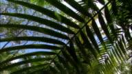 LA, PAN, Tropical rainforest, Fajardo, Puerto Rico