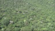 Tropical rainforest in River Amazon catchment area  Medium Close Shot  Aerial Shot