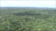 Tropical rainforest in River Amazon catchment area  Medium Shot  Aerial Shot