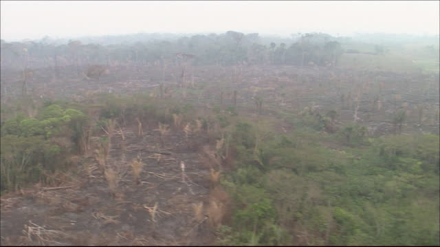 Tropical rainforest in River Amazon catchment area    Tracking Shot   Farmland on cleared ground  Aerial Shot