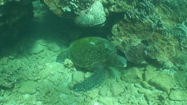 Tropical Sea Turtle in High Definition (HD) saved highest quality.