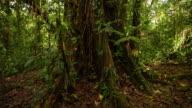 LA TU Tropical tree in the rainforest
