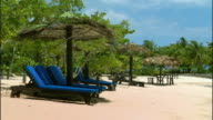 WS Tropical trees blowing in wind above lounge chairs on beach / Ocho Rios, Jamaica