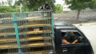 MS Truck Transporting Chickens