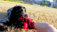 Tug of war with my dog