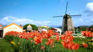 HD: Tulips And Mill in The Background