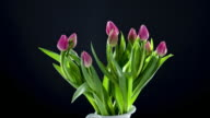 Tulips rotate and rise upwards in a vase preparing to open and flower.