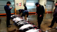 Tuna caught in Vietnamese waters were auctioned at a wholesale market in Osaka on Friday marking a key step forward for Vietnamese fishermen seeking...