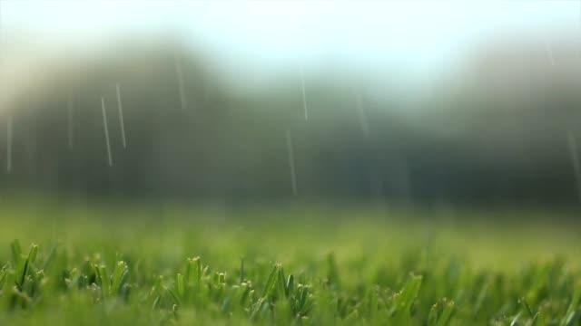 Turf and Sprinkler