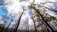 Biegen Sie am Tree und Geäst unter freiem Himmel.