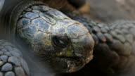 Turtle close eyes