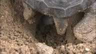Turtle Filling In Downhole