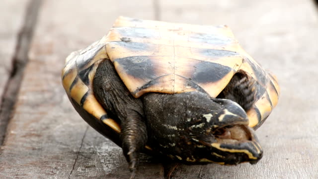Turtle upside down