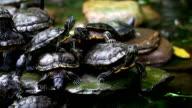 Turtles Colony