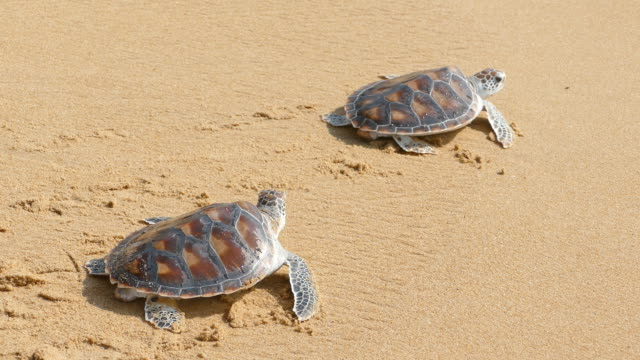 Turtles crawl to freedom