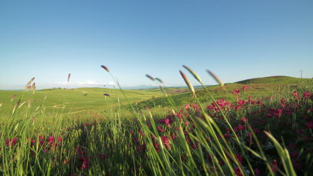 Tuscany, blooming green hills landscape