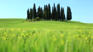 Tuscany Landscape with Cypress Tree, Panning right, HD Video