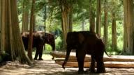 Two Asian Little Elephant