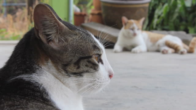 Two cats sleeping together look.