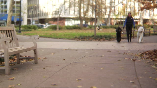 HD: Two cute poodles in the park