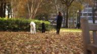 HD: Two cute poodles walking