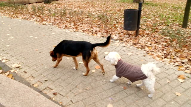 Two dogs walking in the park,