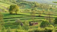 HA WS Two farmers raking hay into bales in green field / Budesti, Calarasi County, Romania