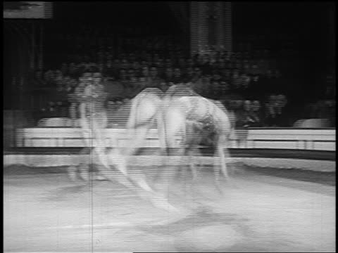 B/W 1955 PAN two female acrobats in costumes doing handstands + flipping over in synch