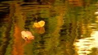 Zwei Blumen floating-Fluss auf Tahiti