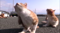 Two ginger-colored cats scratching behind their ears, Ainoshima, Fukuoka, Japan