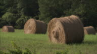 Two hay bale rolls in grassy field Agriculture bale grazing animal feed No people