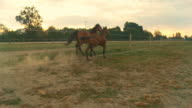 HD SLOW MOTION: Two Horses Running At Dawn