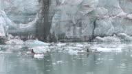 WS, Two kayakers paddling along Lamplugh Glacier, John Hopkins Inlet, Glacier Bay National Park and Preserve, Alaska, USA