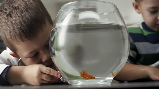 Two little boys with goldfish