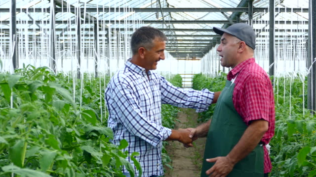 4K Two men in handshake in greenhouse